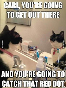 cat mirror self talk